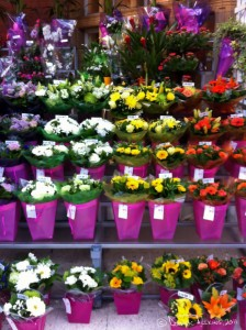 Day 3: Flowers at Marylebone Station - shot on a iPhone 4 at ISO80, f/2.8, 1/15 sec at 3.85mm