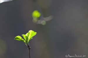 14.1 - Backlit leaves - Shot on a Canon EOS 5D Mark II at ISO500, f/5, 1/250 sec at 300mm