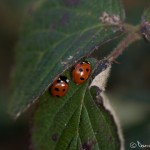 More ladybirds